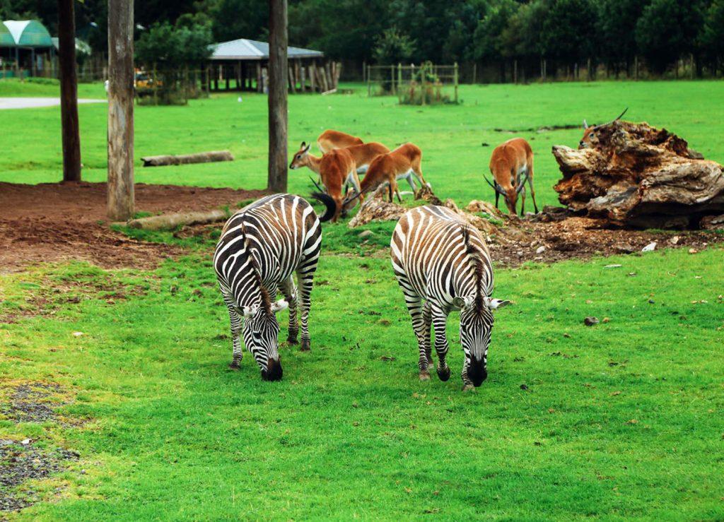 Blair Drummond Safari Tours Escocia Scotlandtrips